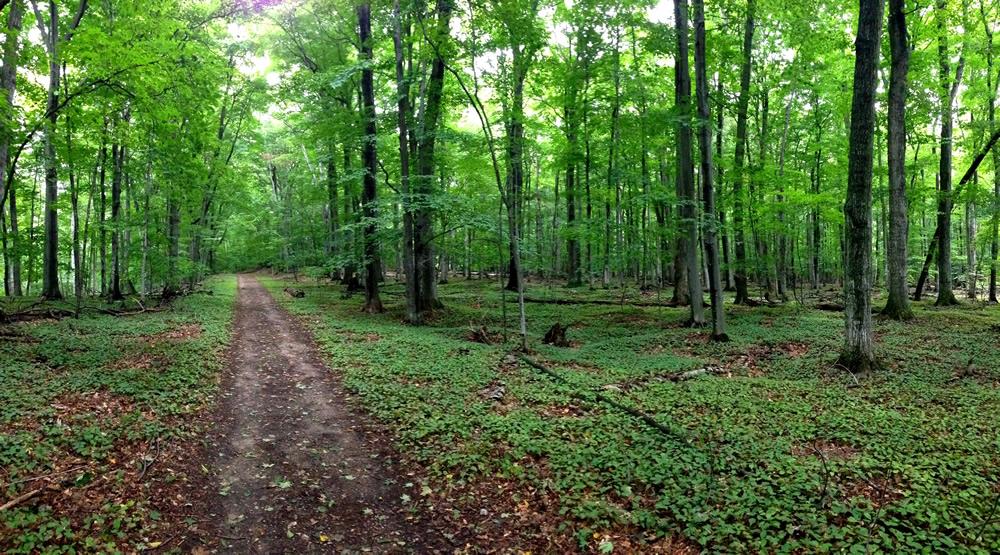 Hiking Trails In Northern Michigan Indigo Bluffs