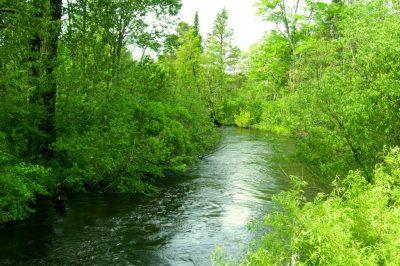 East Creek Reserve