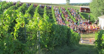 View of the Vineyards and Starting Line at the Leelanau Harvest Stompede